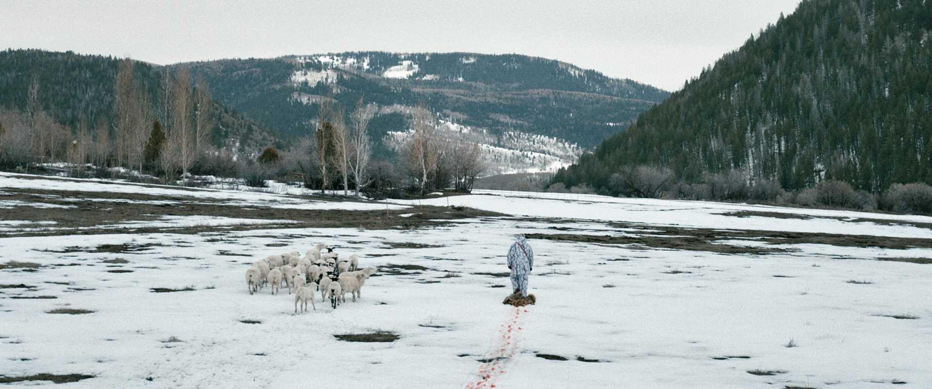 Risultati immagini per wind river cinematography